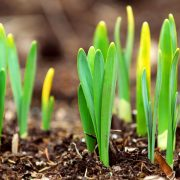 healthy in springtime