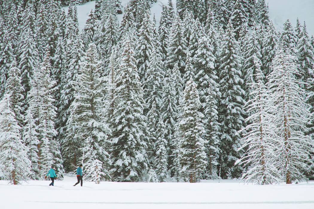 greg rakozy winter-forest