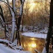 river trees in winter sun