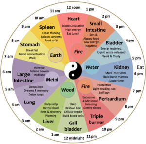 24 Hour Body Clock of Chinese Medicine